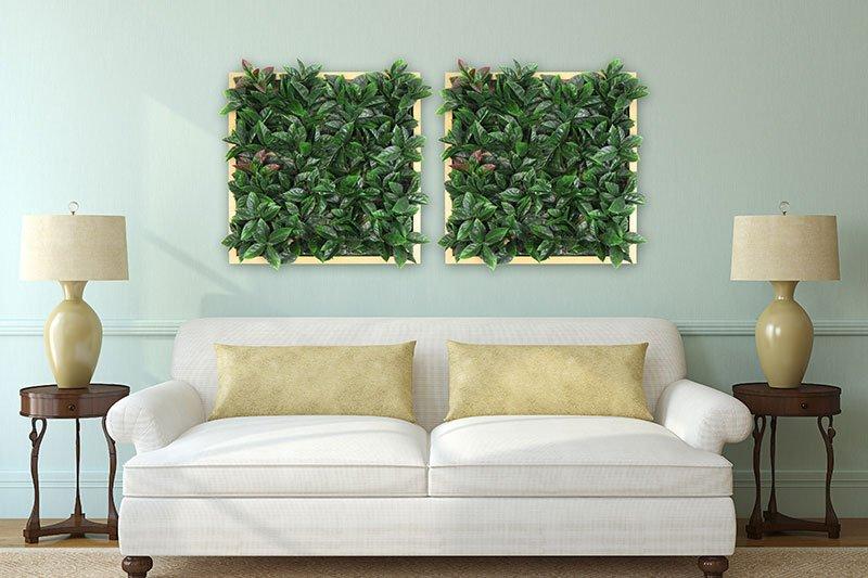 pared de plantas en marcos