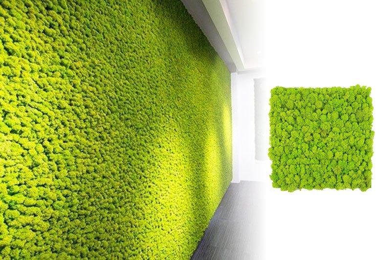 parede de verde musgo