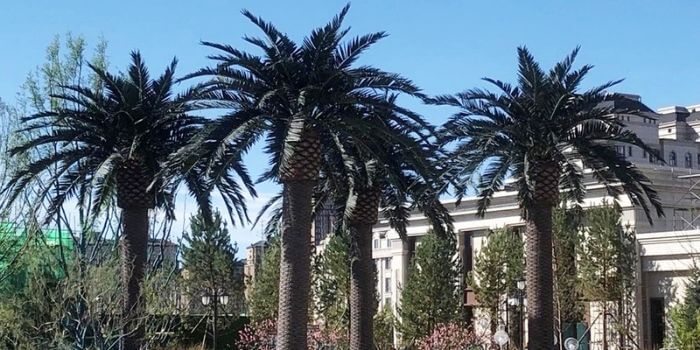 outdoor-large-artificial-trees-for-landscaping