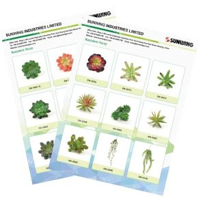 Catálogos de suculentas falsas de Sunwing