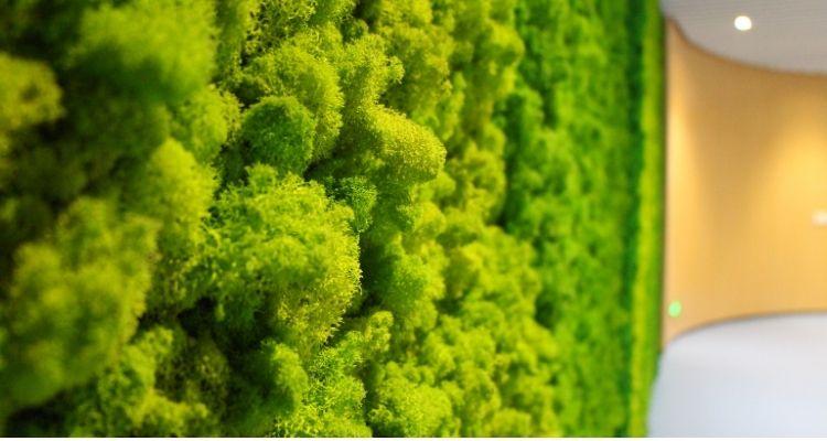 proveedor de musgo artificial y real
